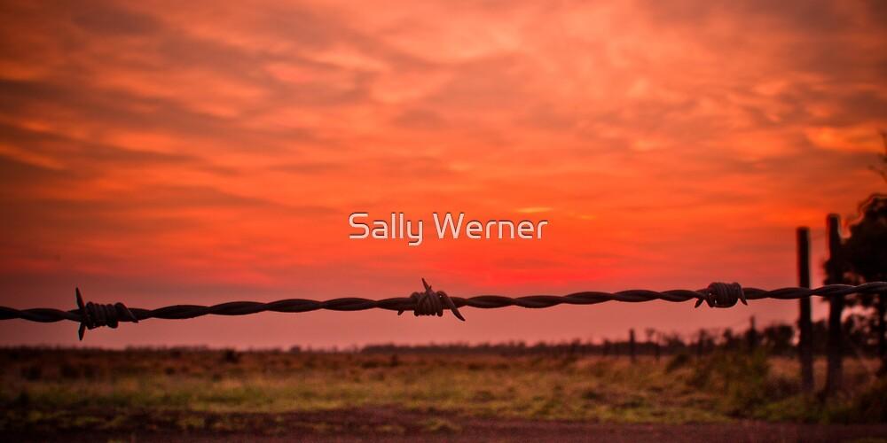Addalyn's Sunrise by Sally Werner