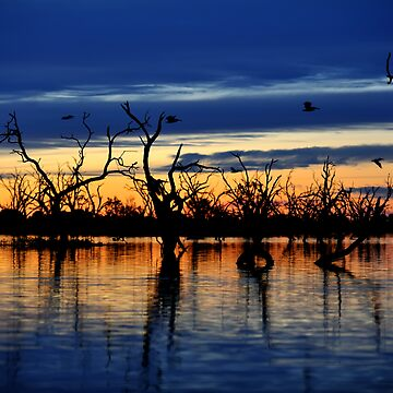 Reflections of the Day, Menindee Lakes, NSW by Malleescapes