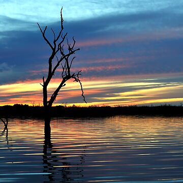 On Still Waters, Menindee lakes, NSW by Malleescapes