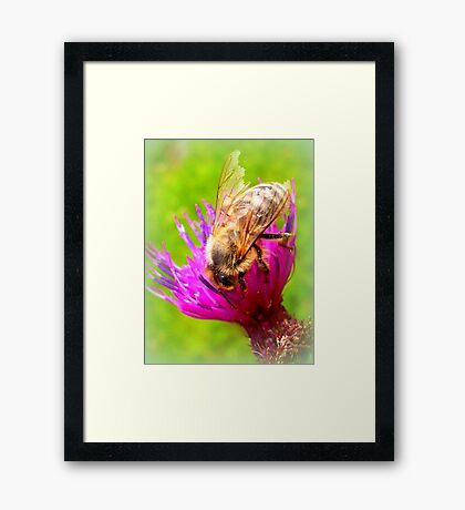 Frayed Bee on Thistle Framed Print