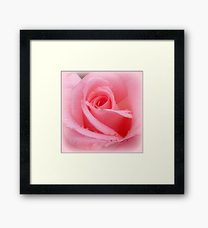 Soft pink rose with dewdrops Framed Print