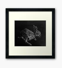 Young White-tailed Jack Rabbit Framed Print