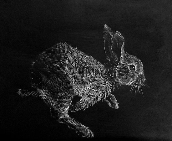 Young White-tailed Jack Rabbit by Christopher Boring