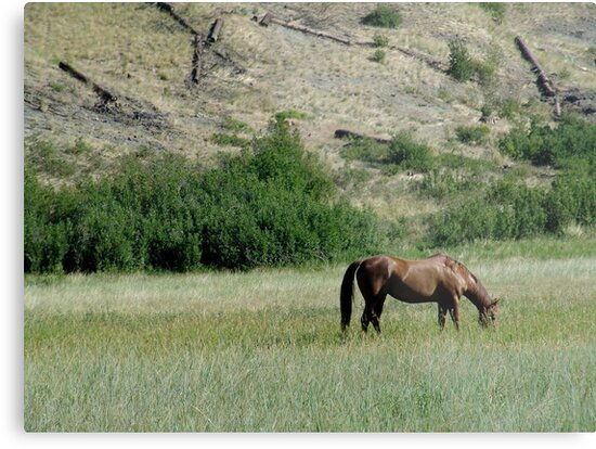 HORSE IN A MONTANA PASTURE by May Lattanzio
