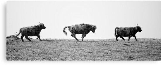 Highland Fling! by jojos