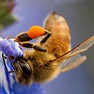 Working Bee by Robyn Carter