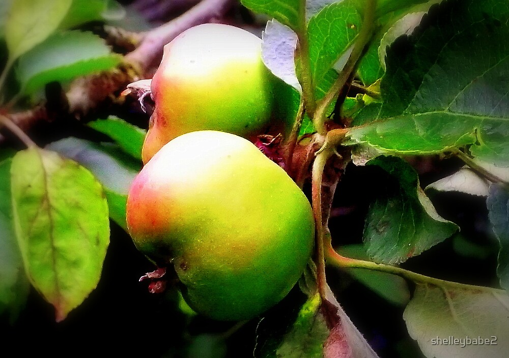 Juicy Apple's... by shelleybabe2