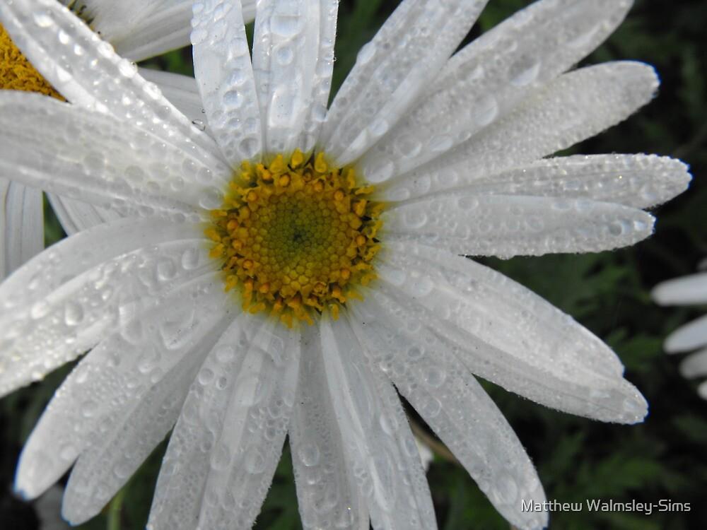 Morning Dew by Matthew Walmsley-Sims