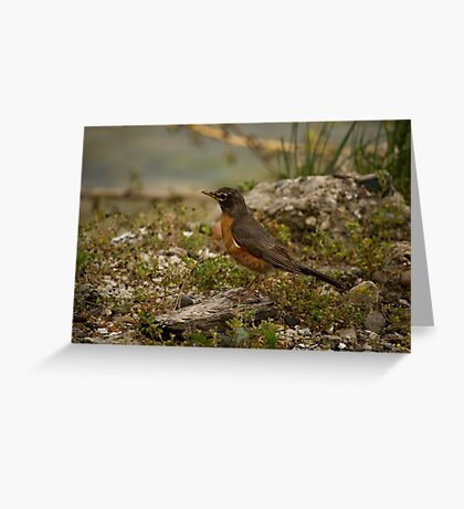 Young Robin 2 Greeting Card