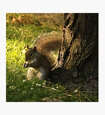 Brown Squirrel Photographic Print