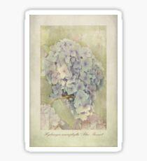 Hydrangea macrophylla Blue Bonnet Sticker