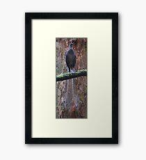 A bird's tale  Framed Print