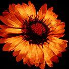 Orange © by Dawn Becker