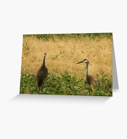 Pair of Sandhill Cranes Greeting Card