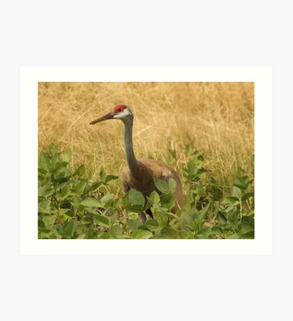 Sandhill Crane Skirted in Green Leaf Art Print