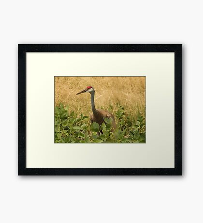 Sandhill Crane Skirted in Green Leaf Framed Print