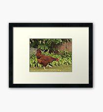Red Rock Chicken Framed Print