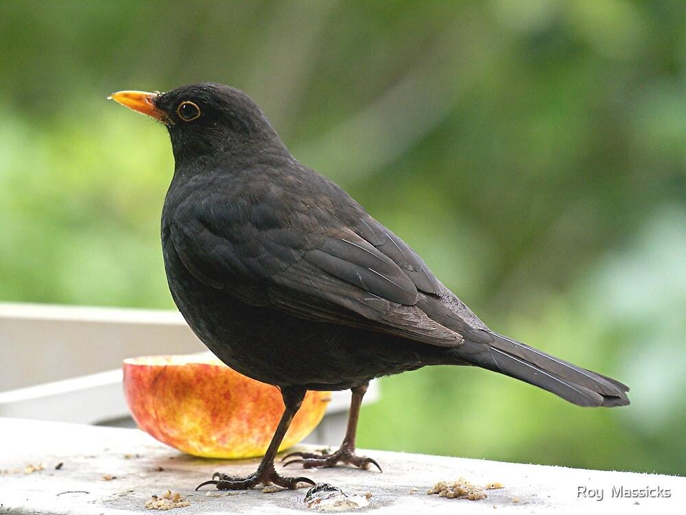 Blackbird a calling........! by Roy  Massicks