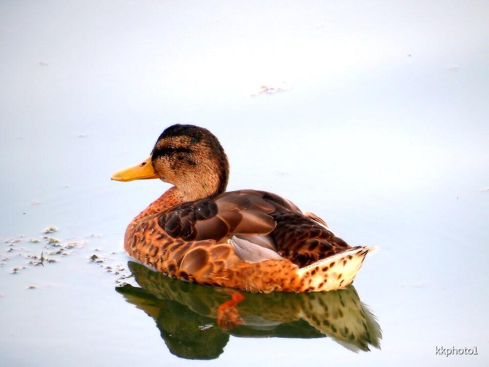 Female Mallard Duck by kkphoto1