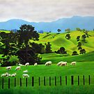 Sheep in the Pasture by jsalozzo