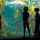 Birch Aquarium by photosbytony