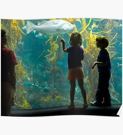 Birch Aquarium Gifts Merchandise Redbubble
