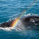 Rainbow warrior by Robyn Lakeman