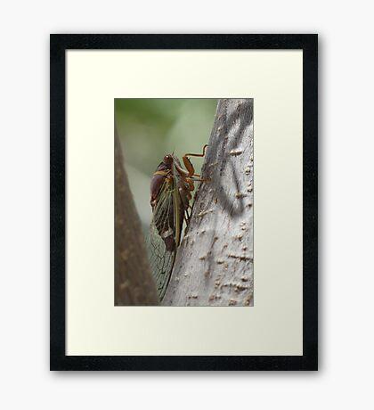 Cicada (Cactus Dogders) Framed Print