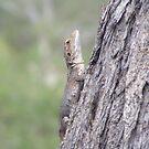 Shy dragon. Jacky Lizard - Amphibolurus muricatus by Lydia Heap