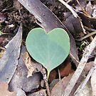 Love in the bush by Lydia Heap
