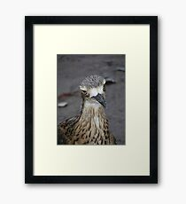 What are you looking at? Bush Thick-knee - Burhinus magnirostris Framed Print