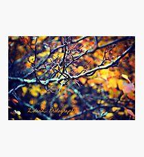 Autumn Point Photographic Print