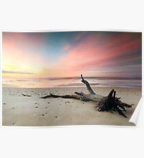 Fallen Tree Beach Poster