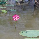 Water Lily by georgieboy98
