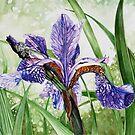 Blood Iris by samcannonart
