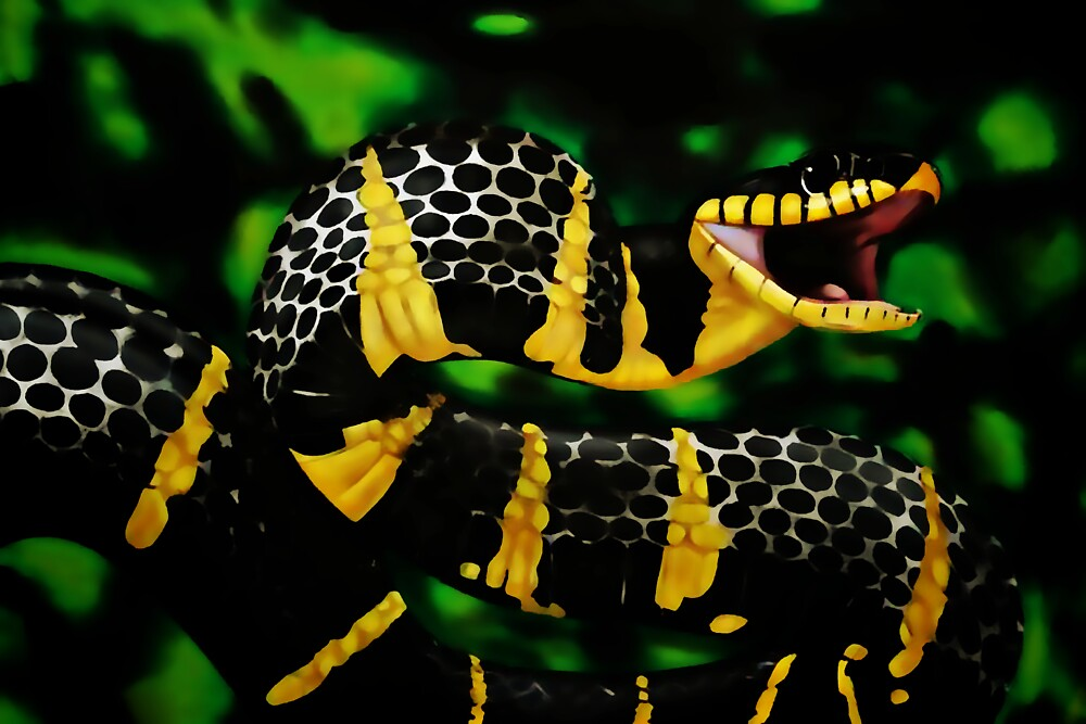 Gold ringed Mangrove snake (Boiga dendrophila) by Terry Bailey