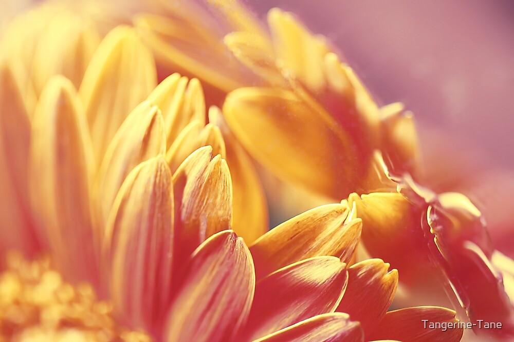 Gently Burning by Tangerine-Tane
