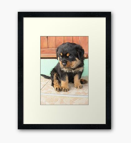 I Don't Need To Be Told I Am Cute ..... Framed Print