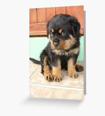 I Don't Need To Be Told I Am Cute ..... Greeting Card