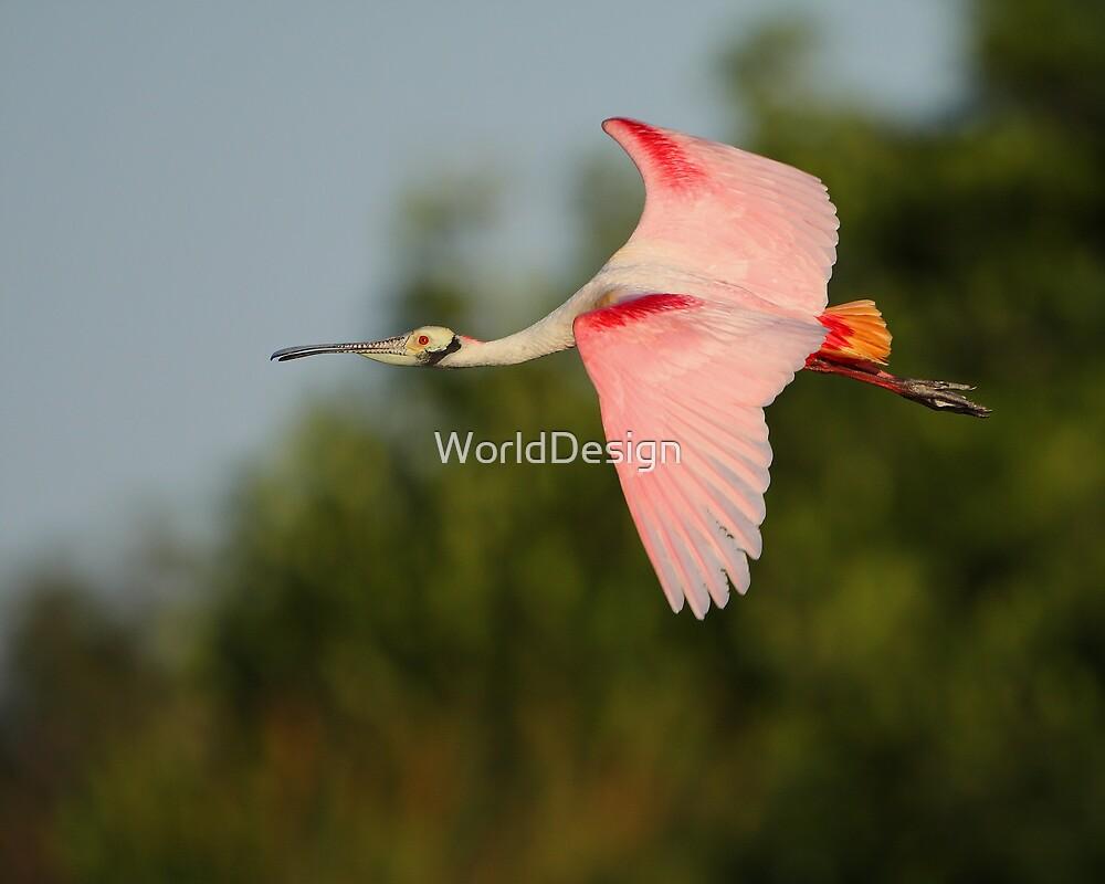 Roseate Spoonbill in Flight by WorldDesign
