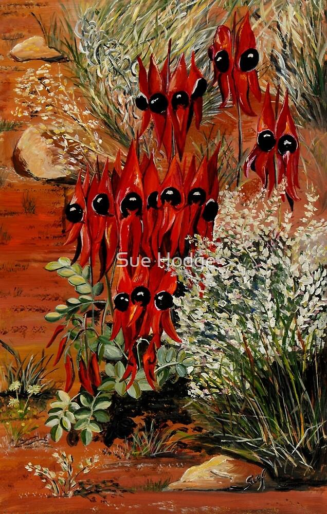 Sturt Desert Pea by Sue Hodge