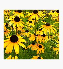 Happy Flowers Photographic Print