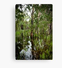Paperbark Swamp Canvas Print