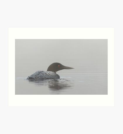 Loon in early morning fog - Common Loon Art Print