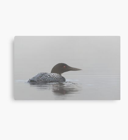 Loon in early morning fog - Common Loon Canvas Print