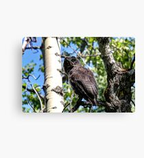 Great Gray HDR Canvas Print
