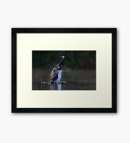 Pisces Rising - Common loon with fish Framed Print