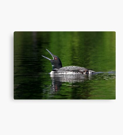 Call of the loon - Common Loon Canvas Print