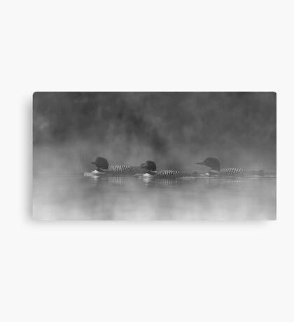 Three Amigos - Common Loons Metal Print