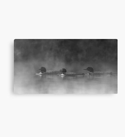 Three Amigos - Common Loons Canvas Print